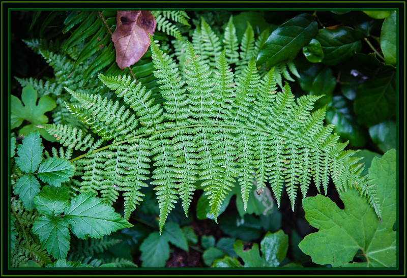 Ferns and Other Foliage