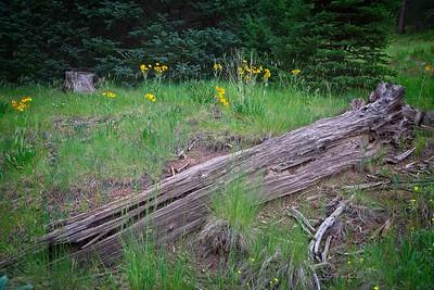 Log & Flowers