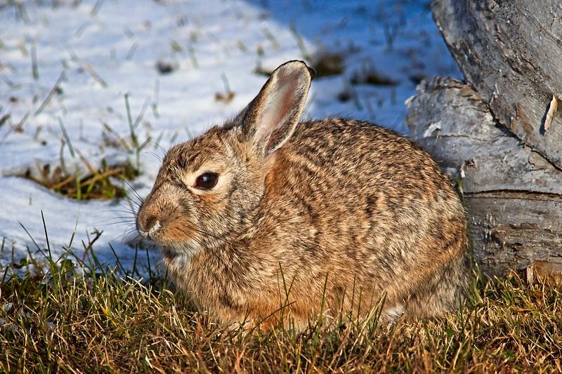 Rick's POTD - Rabbit