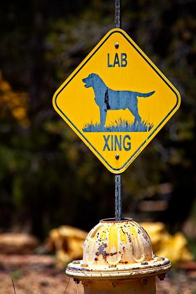 Lab Crossing