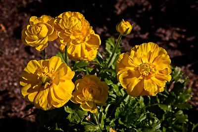 Rick's POTD  -  Flower