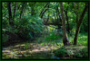Markham Springs Recreation Area