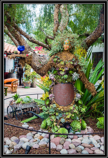 Pepper Tree with Personality