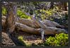 Bristle-Cone Loop Trail