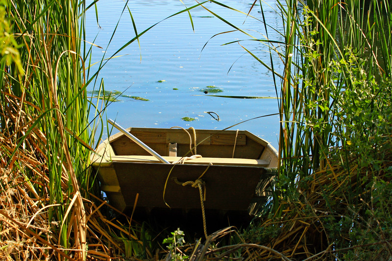 Boat<br /> <br /> Shot at Tres Rios Wetlands Phoenix, AZ<br /> The Park Service uses the boat to perform Maintenance on the Lake...