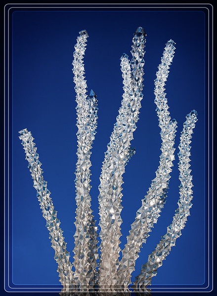 Ocotillo in Glass