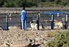 Morning Solitude<br /> <br /> A Lady and two well behaved dogs enjoying some bird bliss.<br /> I went to the other side so as not to disturb them.  <br /> Within twenty minutes a person making their way upstream managed to scare off all the birds in the area.<br /> She left and I went a mile upstream to a secluded spot.