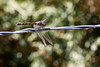 Dragonfly<br /> <br /> One of the few that actually stayed in one spot for a while…