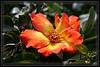 Rose, Irene Marie