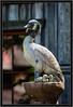 Wood Bird Images