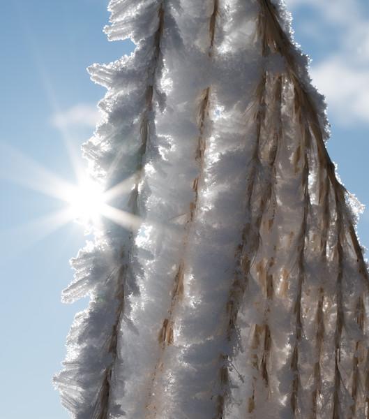 Rime ice left behind by freezing fog