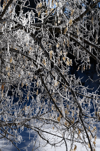 Iced branches near Roughlock Falls, Spearfish Canyon, South Dakota
