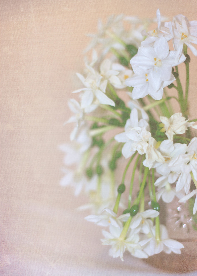 Soft Paperwhites