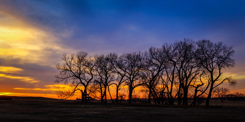 A line of bare trees stand together as the sun sets on a cool spring evening.