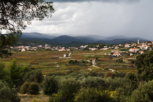 Grk vineyards on the South of Korcula island