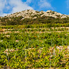 Vineyard on the southern slopes of the Peljesac peninsula