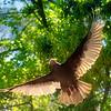 vulture9377crs