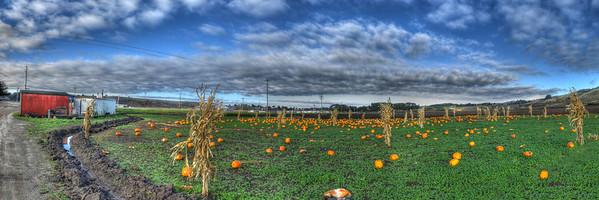 Pumpkins Past Their Prime (45 shots; 5w x 3h x 3d)