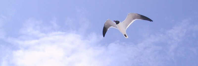 Graceful in flight.