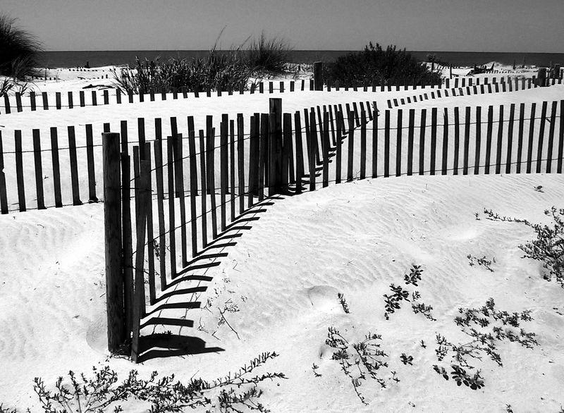 On the beach and sand of Dauphin Island.