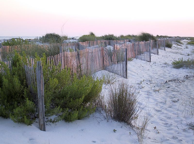 On the beach and sand of Dauphin Island.