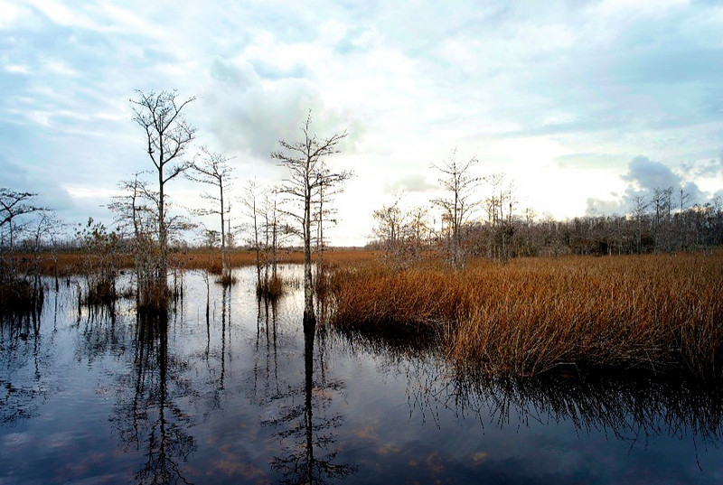 Clouds in the Swamp<br /> Grassy Waters Preserve, Palm Beach County, Florida