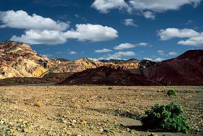 """Green in Death Valley"""