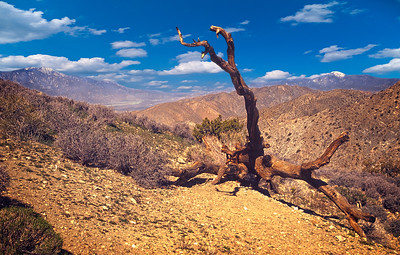"""Lone Pine Remnant"""