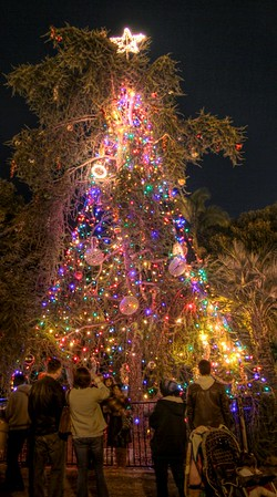2011 December Nights 19