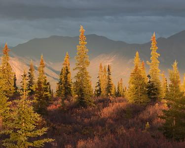 Denali National Park 2014