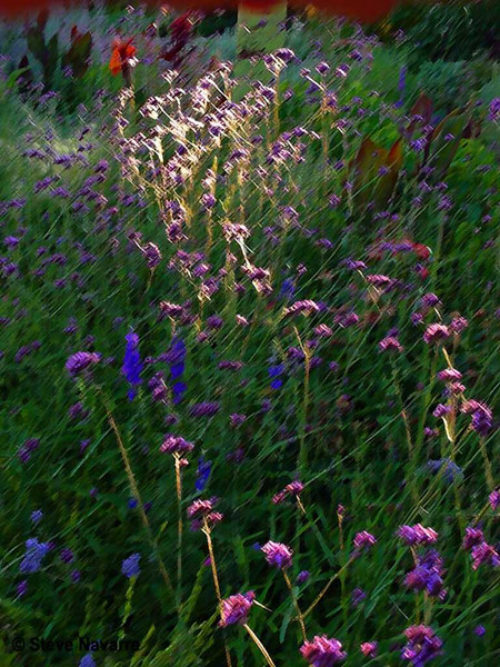 Denver Botanical Gardens Images