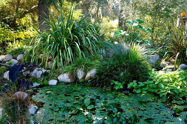 Descanso Gardens - 11/9/13