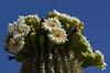 Head in flowers