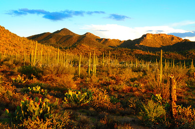 Believe it or not all desert are dust and sand. Desert can have some of the most amazing landscapes and plants imaginable.