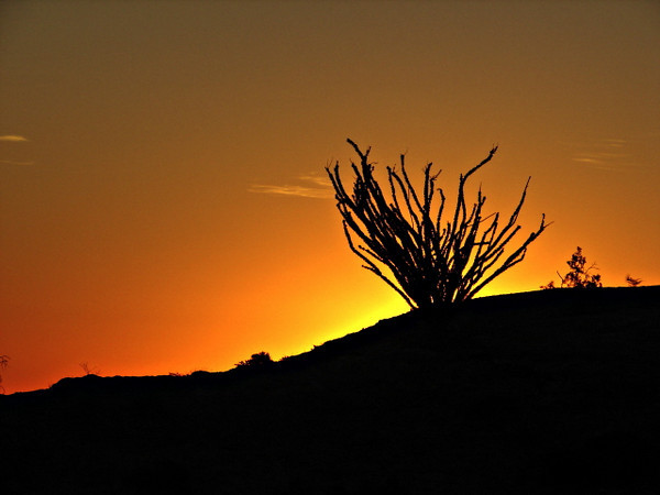 Sunrise<br /> Anza Borrego Desert, CA