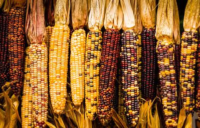 """Indian Corn"""