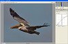 DSC00739_FlyBrwnPel_ACR800CS5FlmCrv_Kpr
