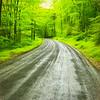 Wet gravel road,lush green forest.
