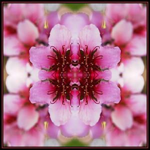 Blossom Block