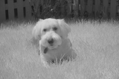 Blu (same scene in infrared) (5 sec f/8 iso 1600 R72 filter)