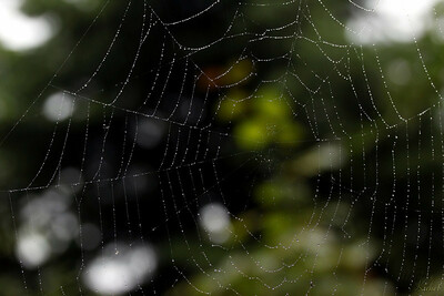 Regentropfen auf einem Spinnennetz
