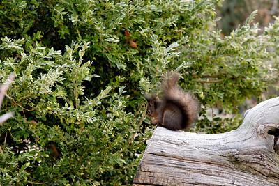 Eichhörnchen bei ISO6400...