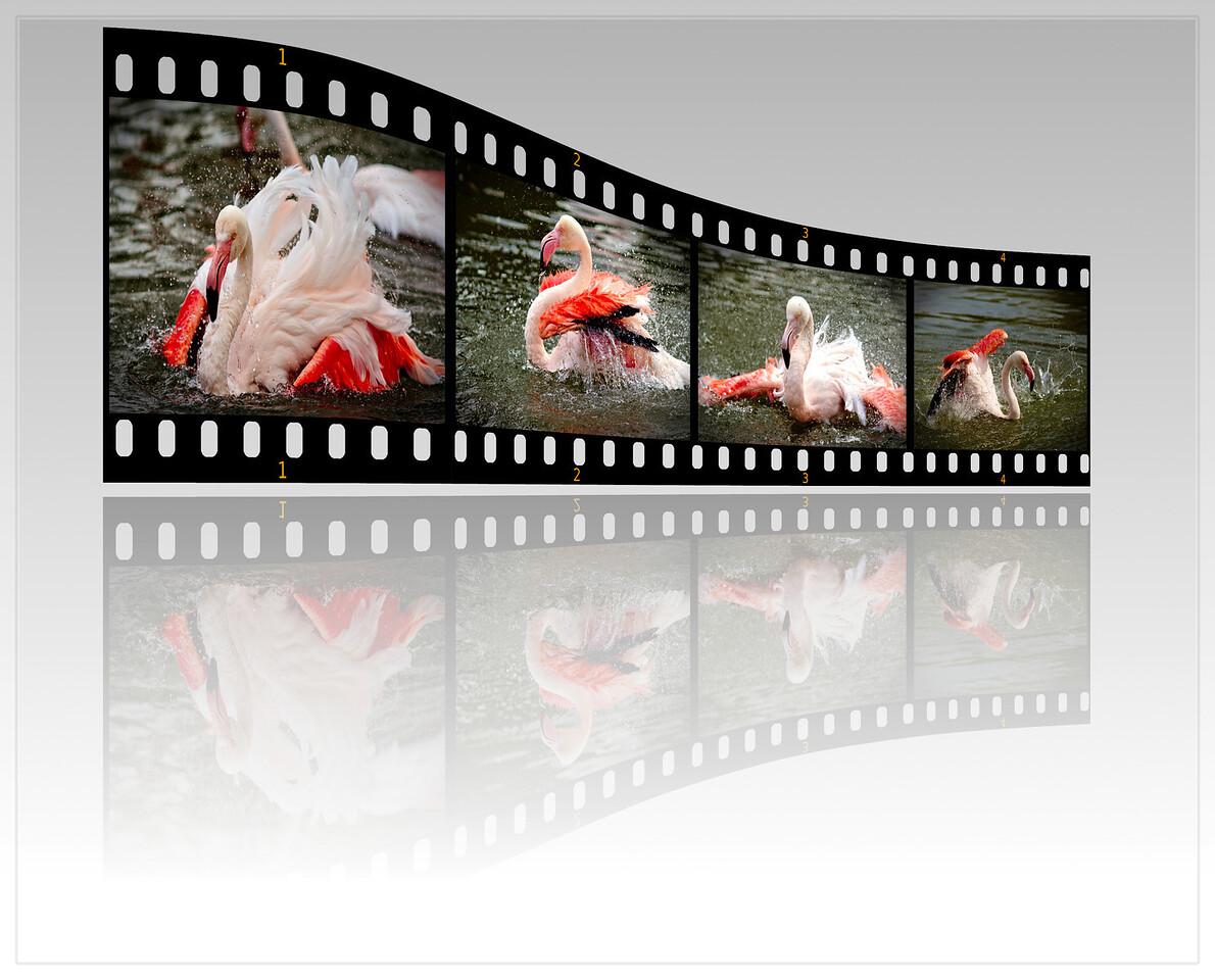 """Aus der Serie """"Badende Flamingos"""""""