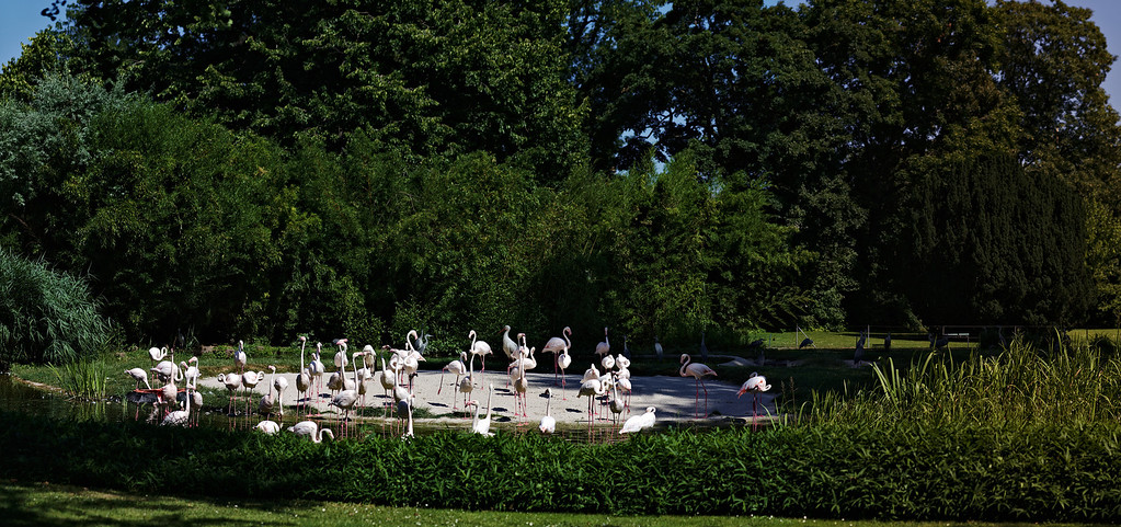 Panorama Flamingo-Gehege<br /> Skaliert 5000x2350px, 9Mb