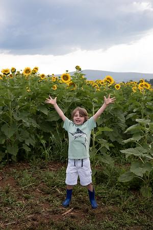 Sunflowers8870_