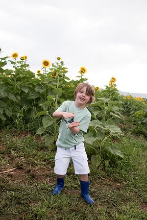 Sunflowers8874_