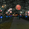 A lighted walkway at Discovery Green. I experimented with a few versions of this photo - this one without any of the green lighting.