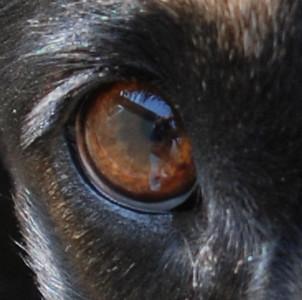 In Gracie's eye