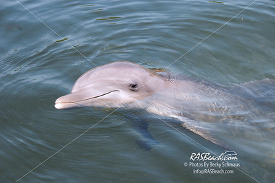 Dolphin_6