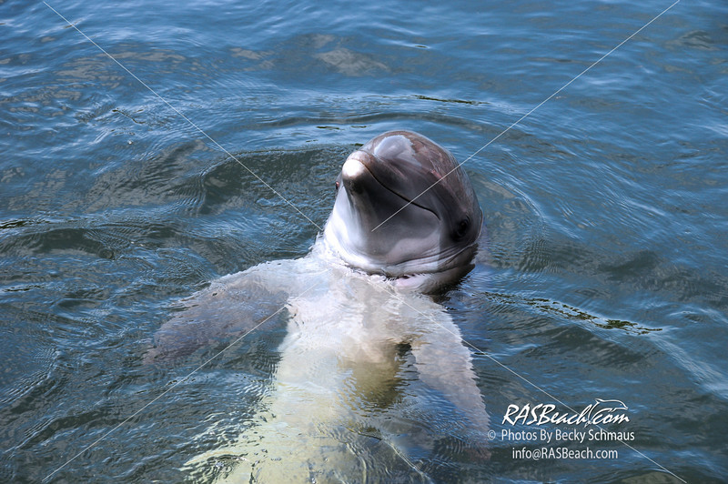 Dolphin_5